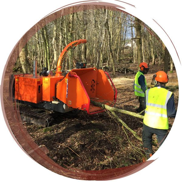 Tree felling near Chester